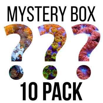 Tidal Gardens - SPS Mystery Box - FREE SHIPPING!