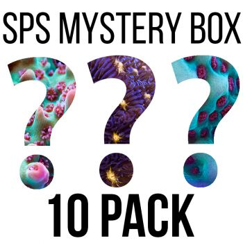 SPS Mystery Box - FREE SHIPPING!