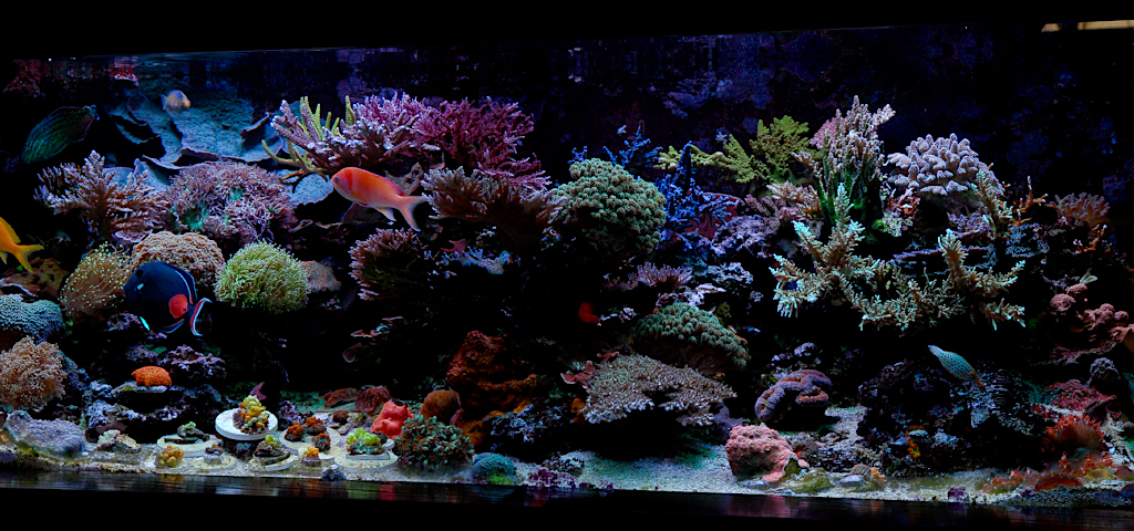 Field Trip To Nathan S Reef Tank